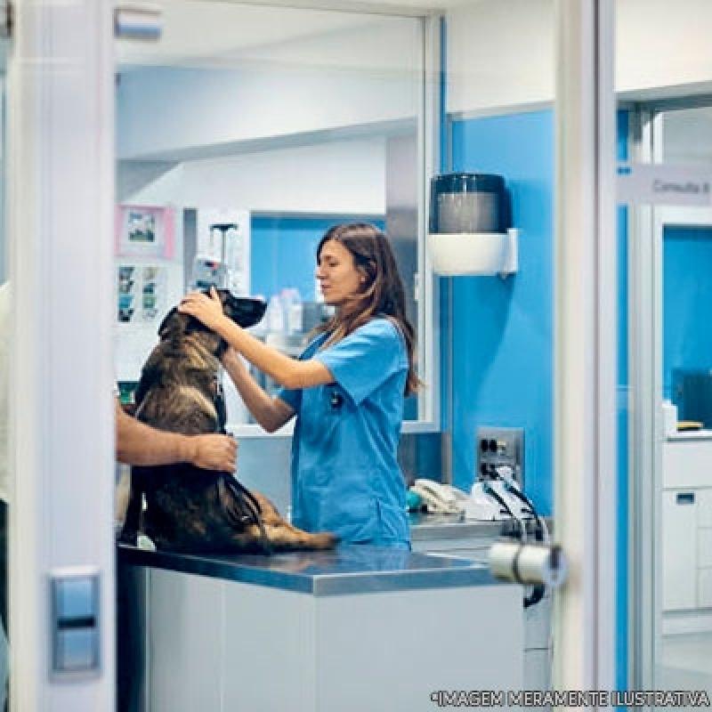 Clínica Veterinária e Pet Shop Localização Itaim Paulista - Clínica Veterinária 24 Horas