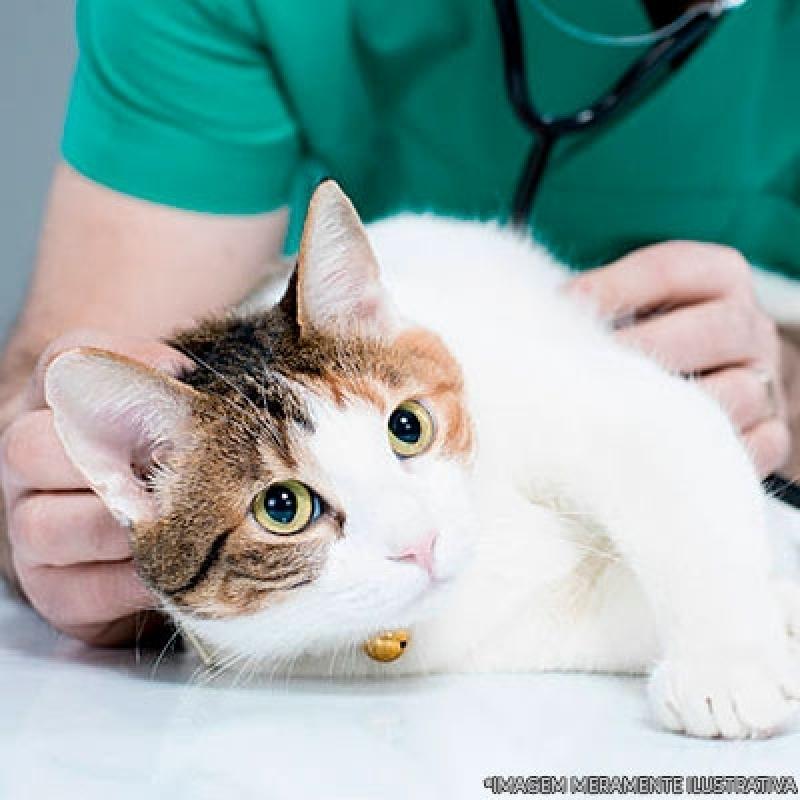 Endereço de Hospital Veterinário do Câncer Vila Buenos Aires - Hospital Veterinário Cães e Gatos
