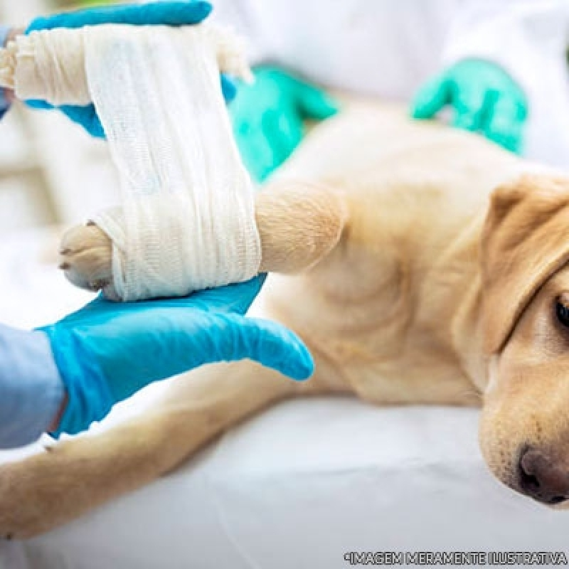 Hospital Veterinário Ortopedia Próximo a Mim Jd São João - Hospital Veterinário Cães e Gatos