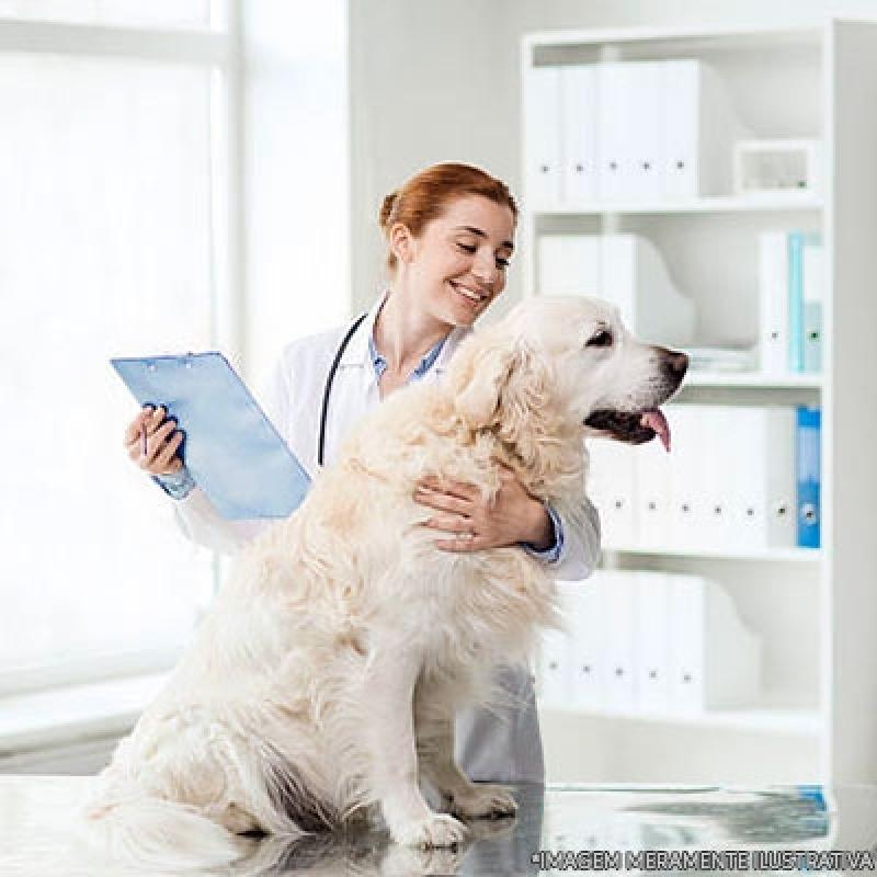 Onde Encontrar Clínica Veterinária Animais Jardim Lapena - Clínica Veterinária Animais