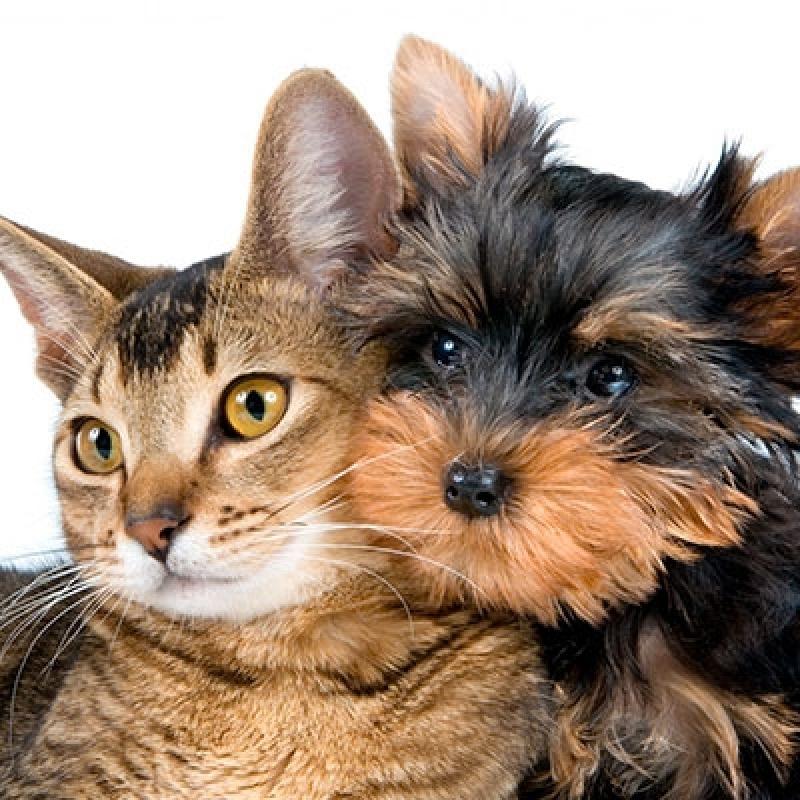 Onde Encontro Hospital Veterinário do Câncer Jardim Lapena - Hospital Veterinário Cães e Gatos