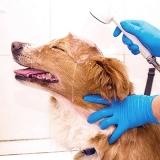 banho e tosa em cães Guaianases