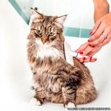 banho e tosa em gatos Parque Sonia