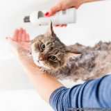 banho e tosa gato Ponte Rasa