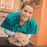 clínica veterinária animais