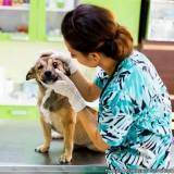 encontrar centro veterinário para cachorro Jardim Miragaia
