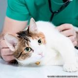 encontrar centro veterinário para gatos Vila Pedroso