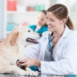 exame de fezes veterinário