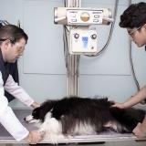 exames veterinários em clínica Jardim Miragaia