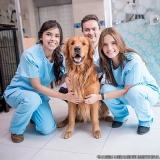 localização de clínica veterinária 24h Vila Dalila