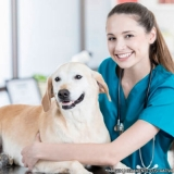 localização de clínica veterinária e pet shop Vila Giordano
