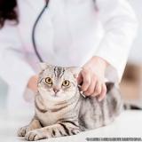 localização de clínica veterinária Ponte Rasa