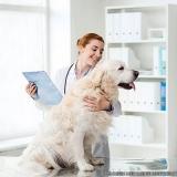 onde encontrar clínica veterinária animais Vila Ré