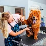 pet shop de cachorro banho e tosa local Vila Jacuí