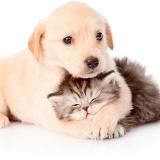 pet shop de cachorro preço Vila Vessoni