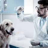 procuro por exames laboratoriais veterinários Itaim Paulista