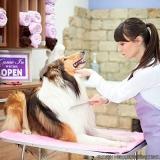 serviço de banho e tosa pet shop Vila Sinhá