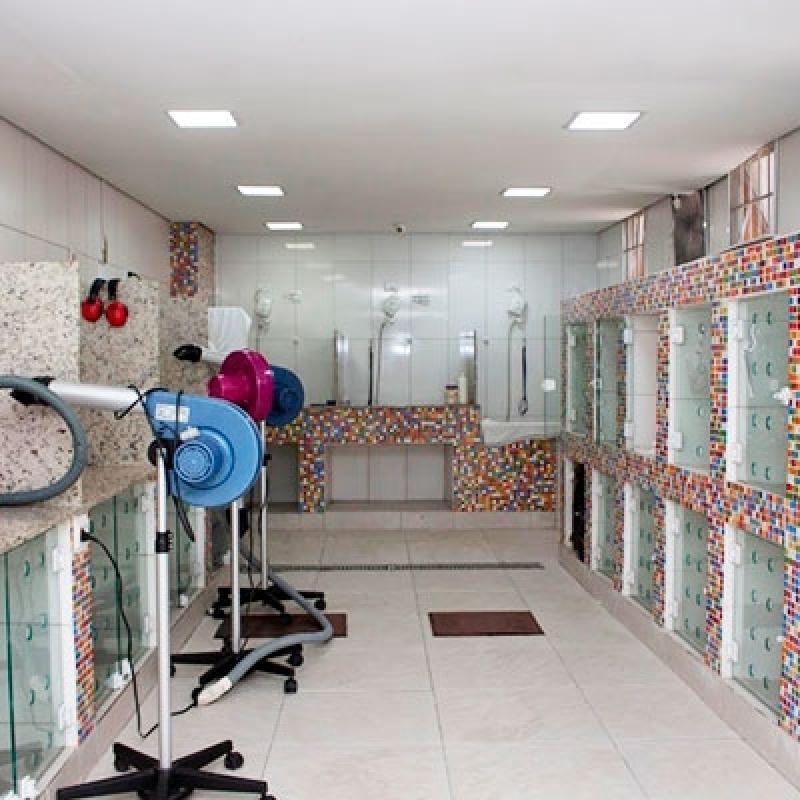 Banho e Tosa 24 Horas Valor Jardim Casa Pintada - Banho e Tosa em Gatos