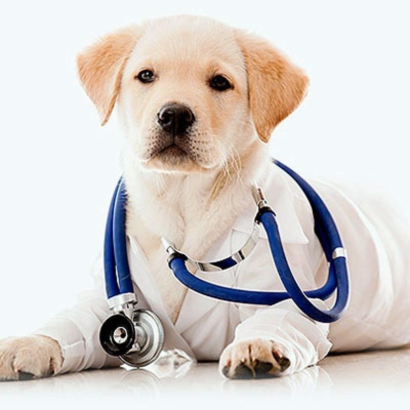 Hospitais Veterinários Cães e Gatos Jardim Casa Pintada - Hospital Veterinário Cães e Gatos