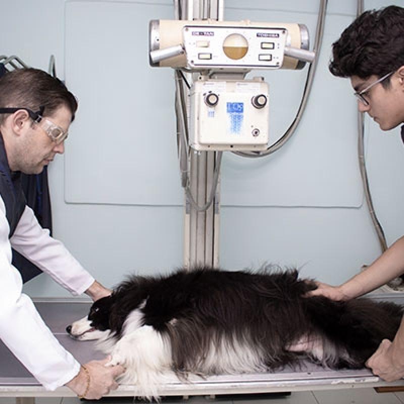 Hospitais Veterinários Raio X Parque Sonia - Hospital Veterinário Cães e Gatos