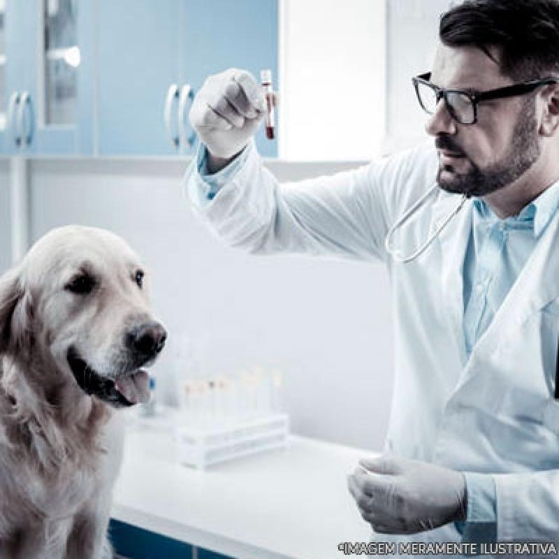 Hospital para Cachorro Próximo a Mim Jardim Lapena - Hospital Veterinário Cães e Gatos
