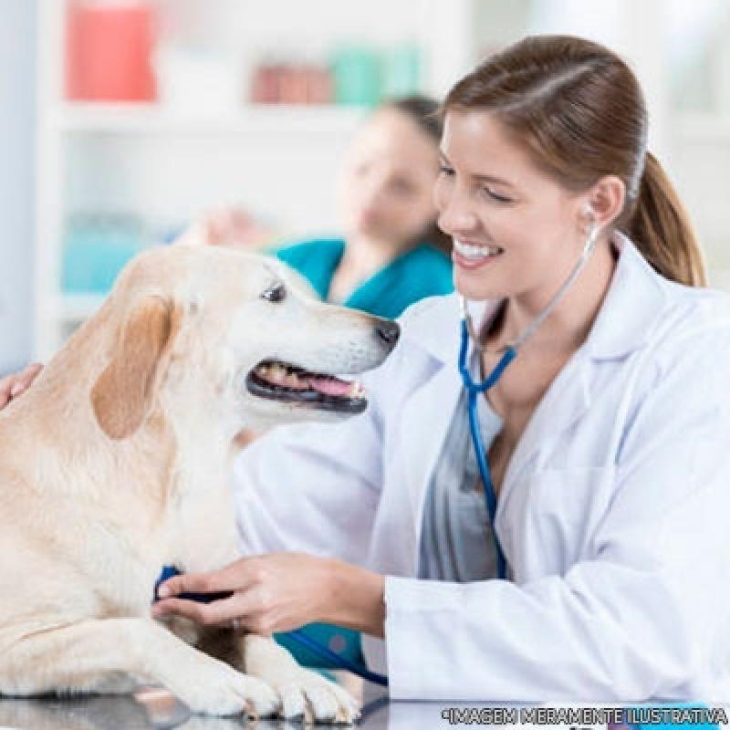 Hospital para Cachorro Vila Ré - Hospital Veterinário Cães e Gatos
