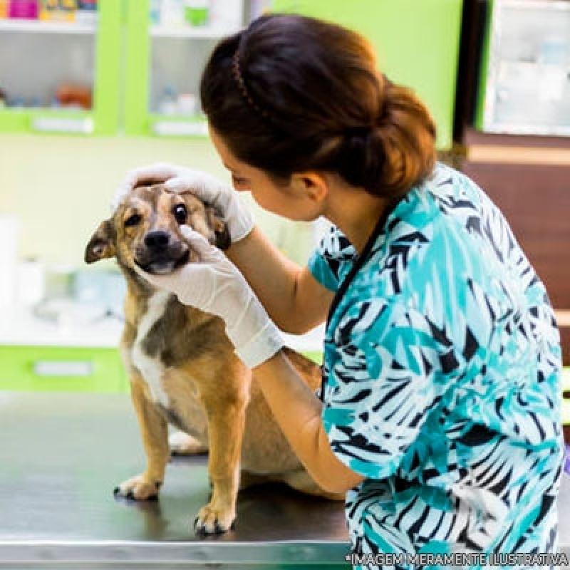 Hospital Veterinário do Olho Próximo a Mim Vila Dila - Hospital Veterinário Cães e Gatos