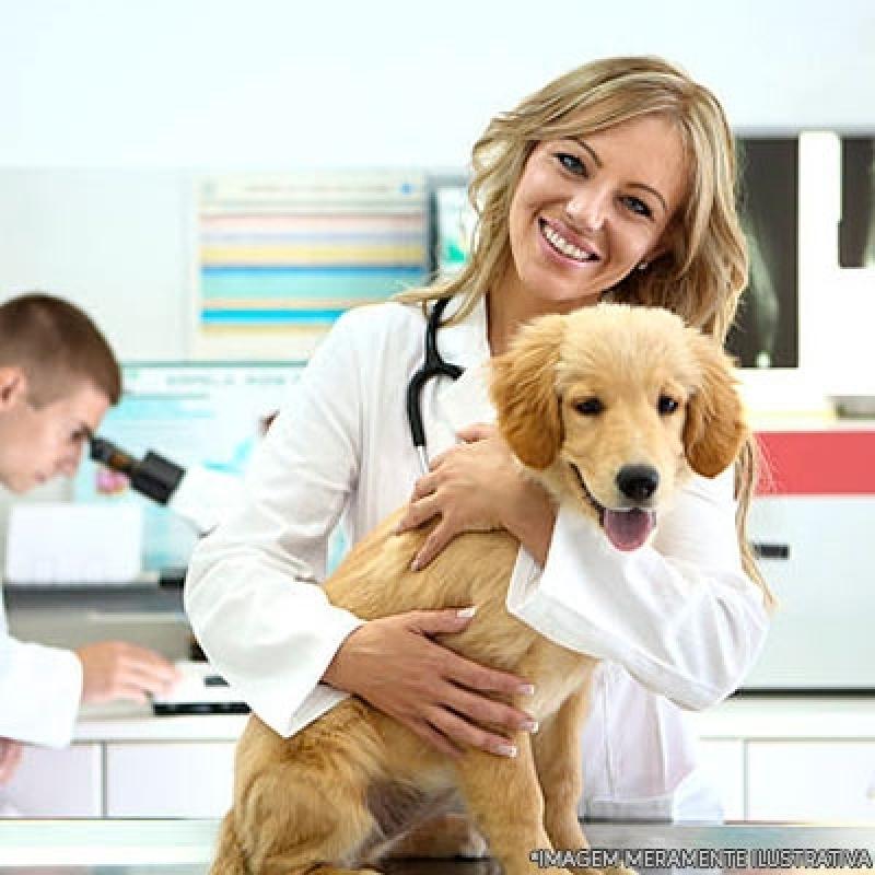 Onde Encontrar Clínica de Veterinária Jardim São Vicente - Clínica Veterinária Animais