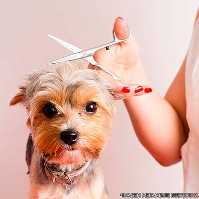 Pet Shop de Cachorro Banho e Tosa Itaquaquecetuba - Pet Shop para Banho