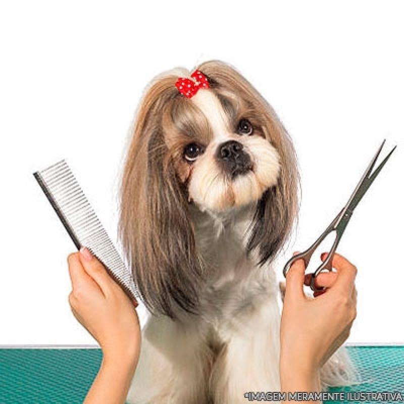 Pet Shop para Cachorro Local Jd da Conquista - Pet Shop de Cachorro Banho e Tosa