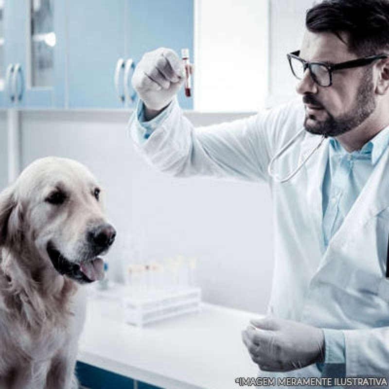 Procuro por Exames Laboratoriais Veterinários Vila Curuçá - Exames Complementares Veterinária