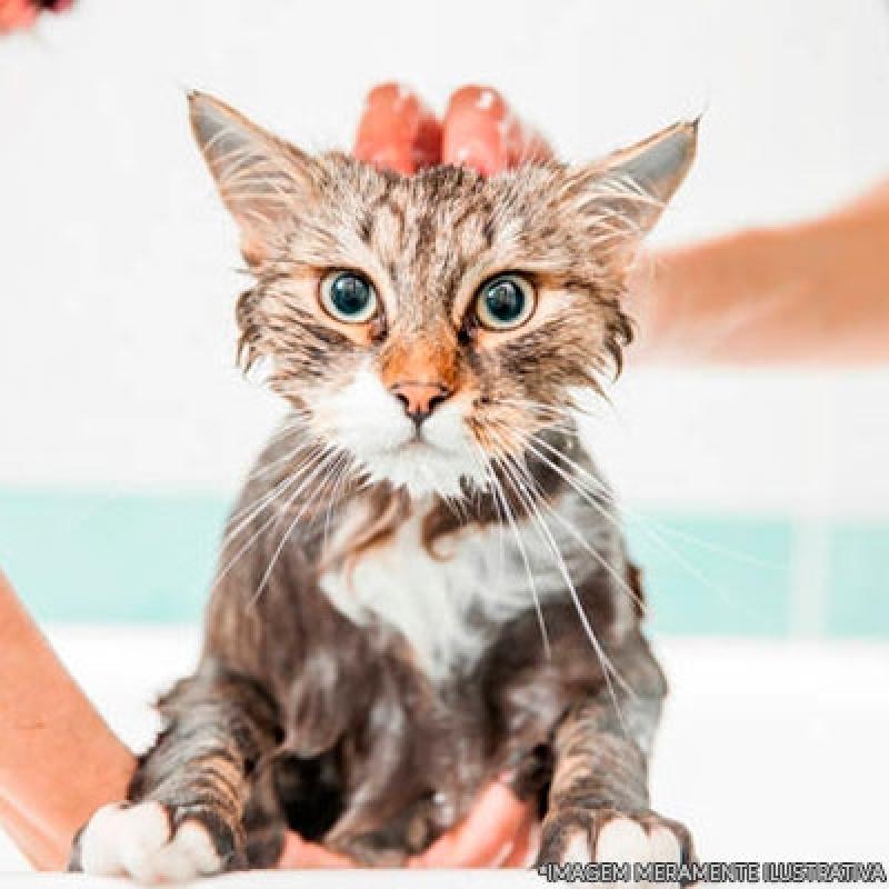 Quanto Custa Banho e Tosa 24h Vila Americana - Banho e Tosa Gato