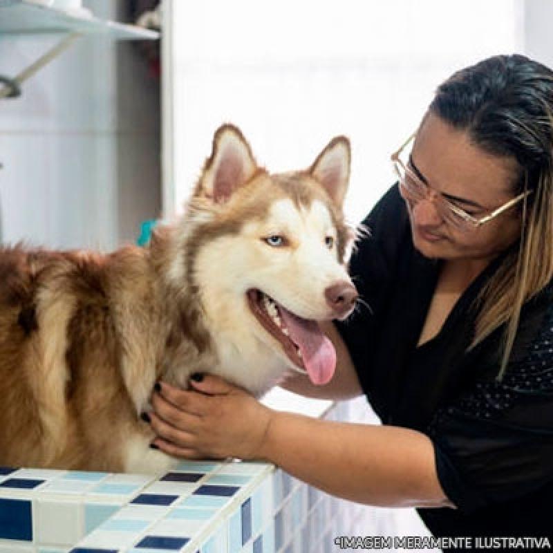 Quanto Custa Banho e Tosa Completo Jd da Conquista - Banho e Tosa Cachorro