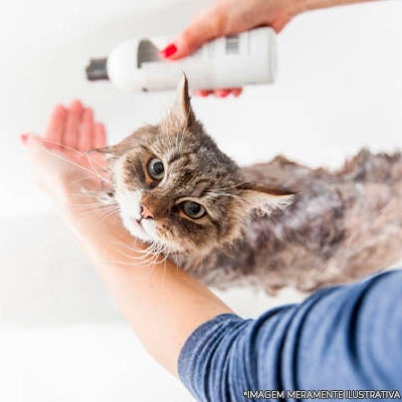 Quanto Custa Banho e Tosa em Gatos Guarulhos - Banho e Tosa Cachorro