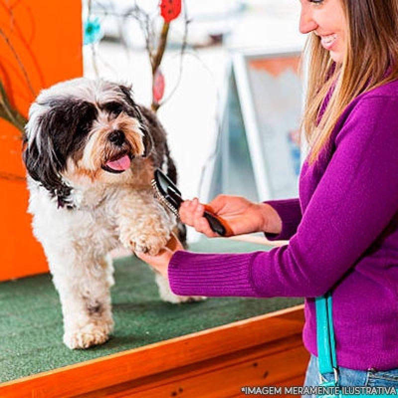Quanto Custa Banho e Tosa Pet Shop Jardim Lapena - Banho e Tosa em Gatos