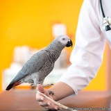 centro médico veterinário localizar Vila Dalila