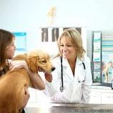 centro veterinário cães e gatos Parque Sonia