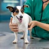 clínicas veterinária 24 horas Jardim Lapena