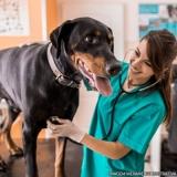 clínicas veterinária animais Vila Dalila