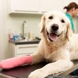 endereço de hospital de cachorro Vila Carolina