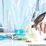 endereço de hospital veterinário 24hrs Vila Reis