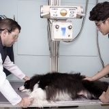 endereço de hospital veterinário raio x Jardim Nair