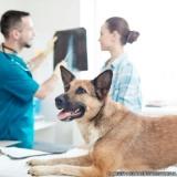 exames veterinários