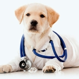 hospitais veterinários cães e gatos Vila Americana