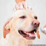 local de pet shop para dar banho em cachorro Vila Carolina
