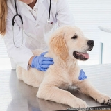 localização de clínica veterinária 24 horas Jardim São Vicente