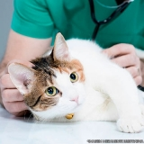 onde encontrar clínica veterinária 24 hrs Vila Aparecida