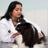onde localizar centro clínico veterinário Vila Americana