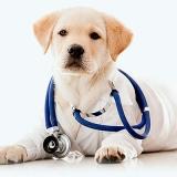 onde localizar centro hospitalar veterinário Jardim Robru