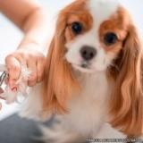 quanto custa banho e tosa cachorro Vila Carolina